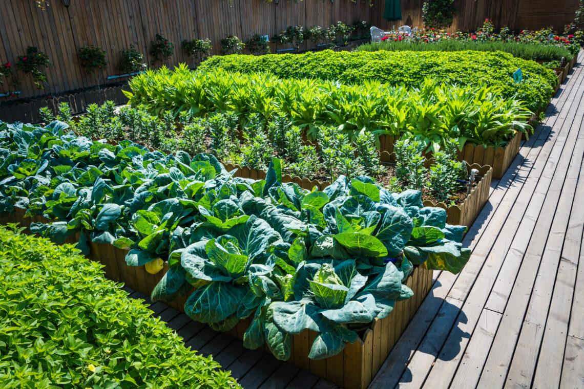 Bülow90 Urban Gardening